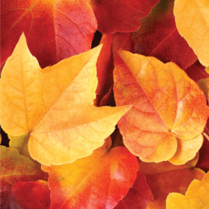 341343_AC_OS_Paper2017_FallLeaves